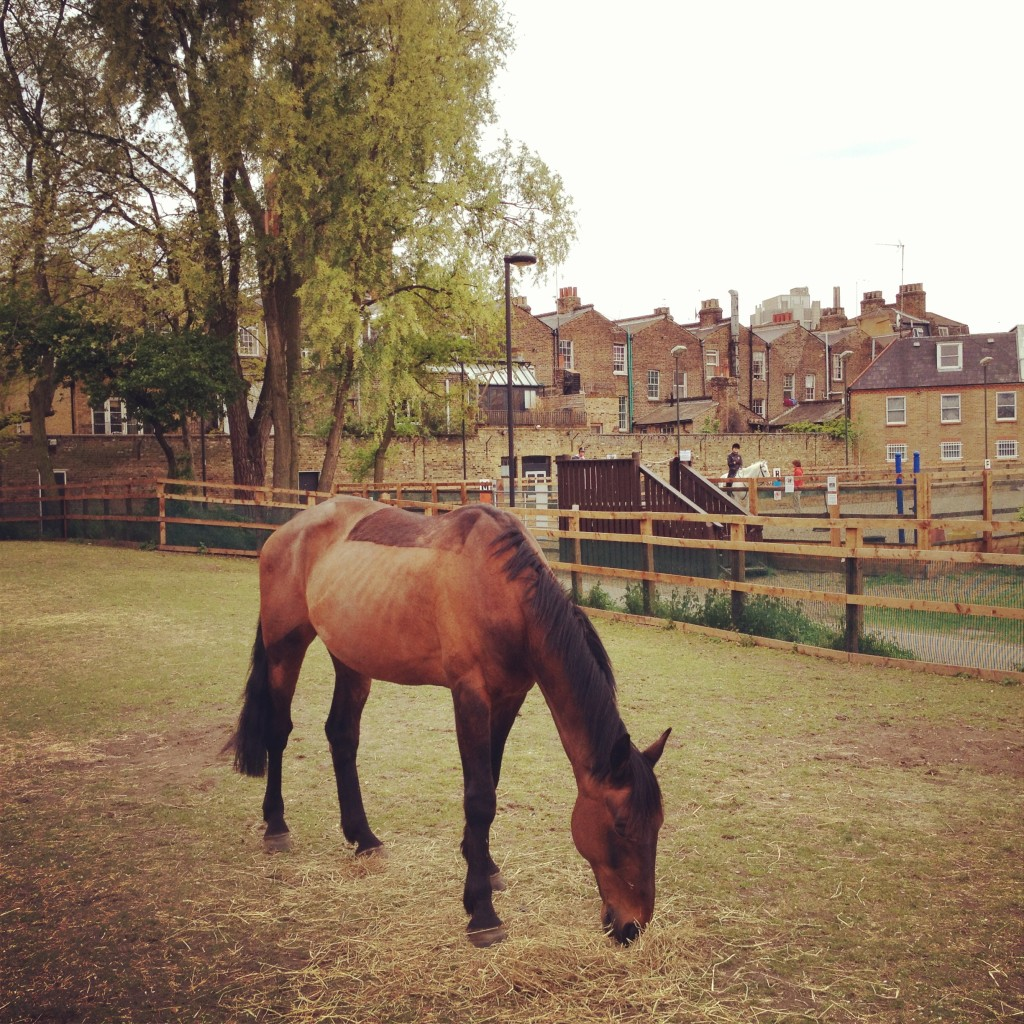 a pony, Vauxhall City Farm - Kenningtonrunoff.com