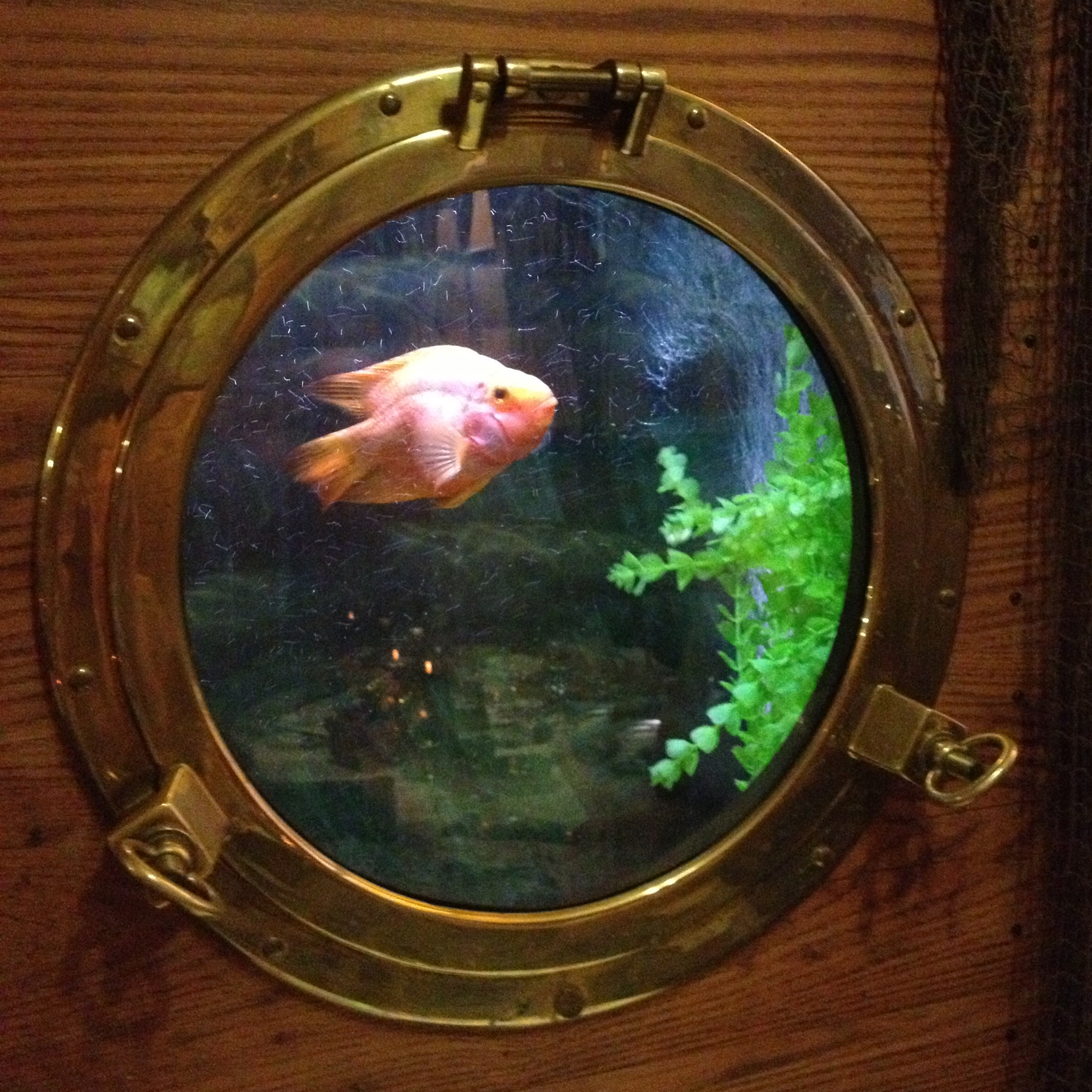 A fish through the porthole of The Lobster Pot - kenningtonrunoff.com