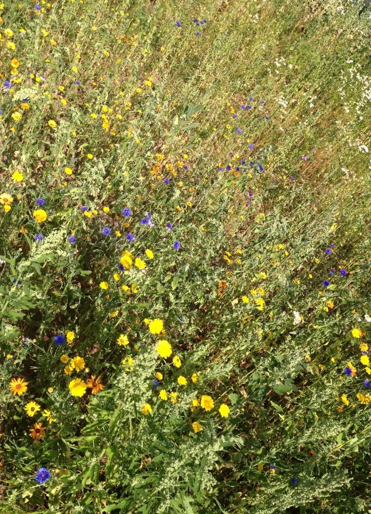 The Mobile Gardeners' Park meadow - kenningtonrunoff.com