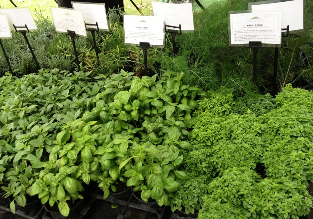 Oval Farmers Market - herbs - kenningtonrunoff.com
